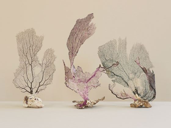 Three individual pieces of delicate white and purple coral on a white background