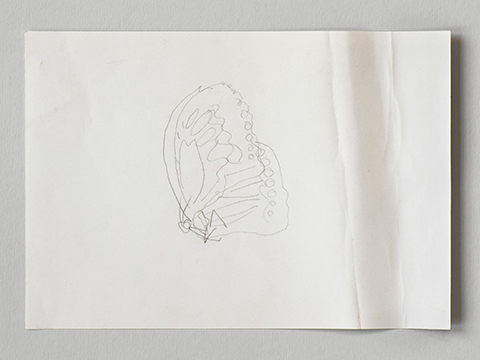 Photograph of a pencil sketch by Helen Murray of a butterfly on white paper on a grey background